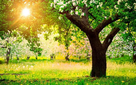 Глобальное потепление и сад